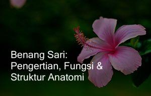 bagian anatomi benang sari