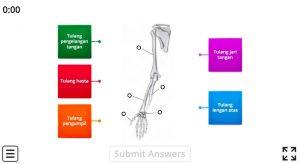 bagian tulang tangan