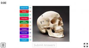 tulang kepala manusia