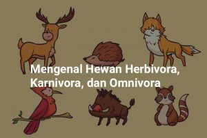 hewan herbivora karnivora omnivora