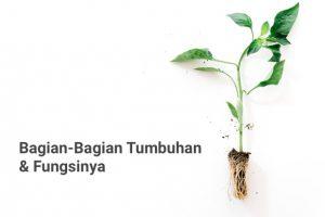 bagian bagian dari tumbuhan dan fungsinya