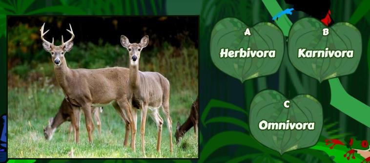 Apakah Aku Herbivora, Karnivora, atau Omnivora?