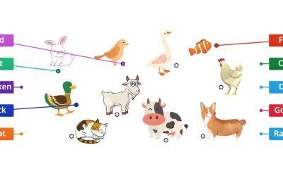 English Vocabulary: My Pet